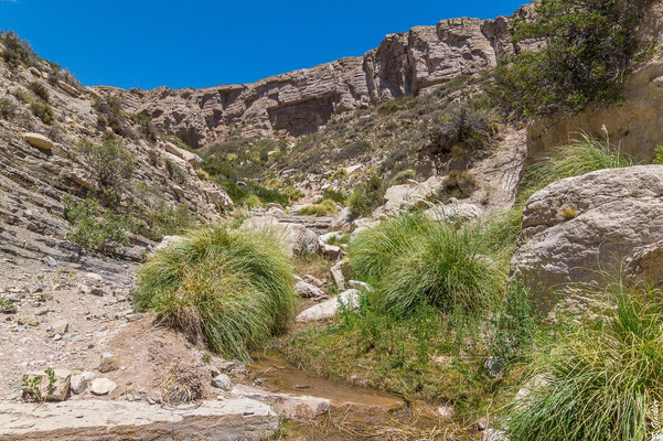 Auf dem Weg zum Wasserfall Manqui Malal