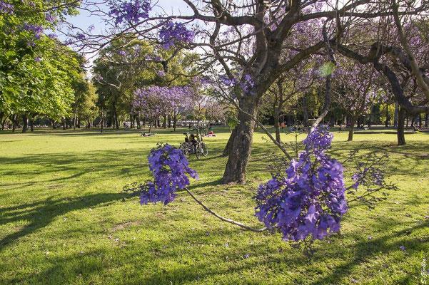 Parque 3 de Febrero, Buenos Aires