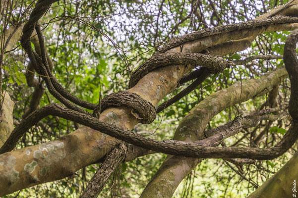 (noch) unberührte Natur genießen: Esteros del Iberá