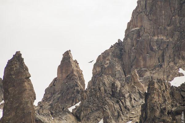 Kondor, Nationalpark Nahuel Huapi