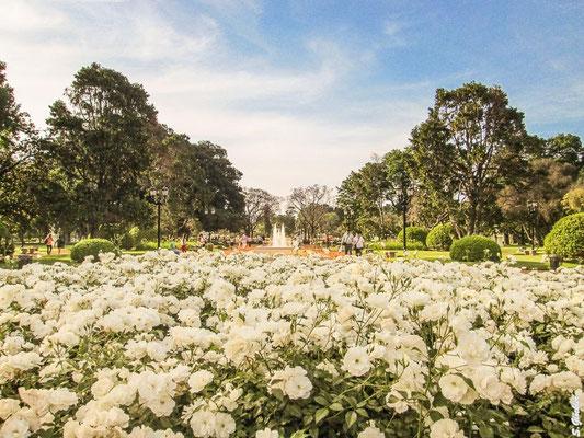 Rosengarten in Palermo