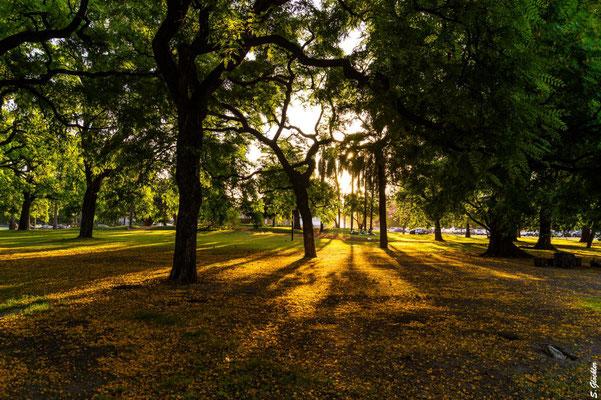 Bosques de Palermo, Parkanlage in Buenos Aires