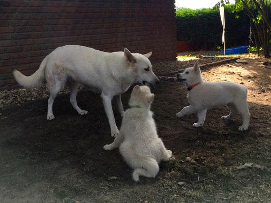 Milka spielt mit Buck und Leona