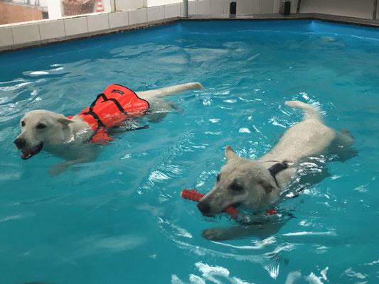 Milka schwimmt mit Weste