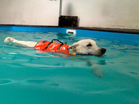 schwimmen, schwimmen, schwimmen :-)