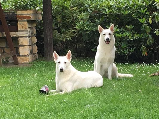 Milka (sitzt) und ihr Bodyguard Mama Arjuna ;-)