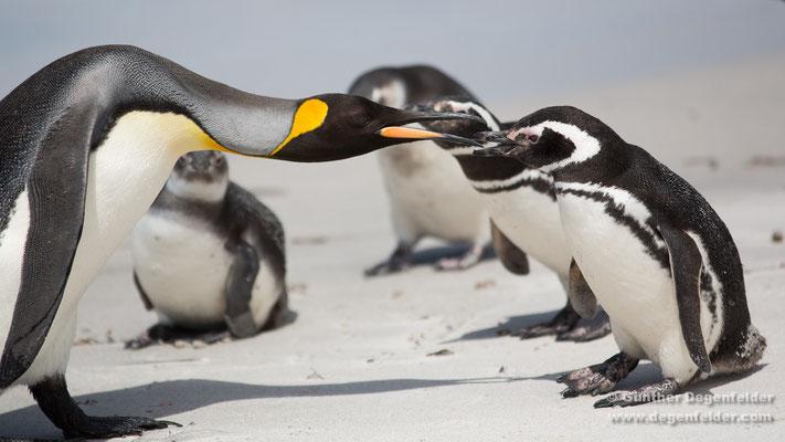 Pinguine