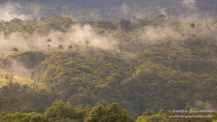 Cosanga Regenwald
