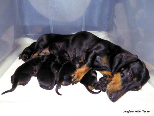 Alle sechs U-Babies kuscheln sich an Mama.