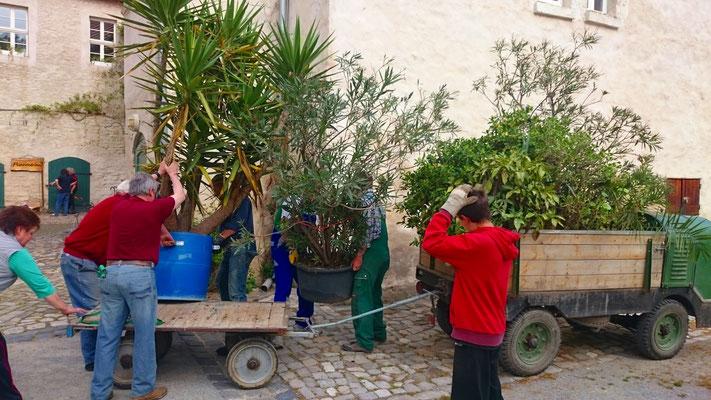 Jährlicher Blumentransport auf der Wasserburg