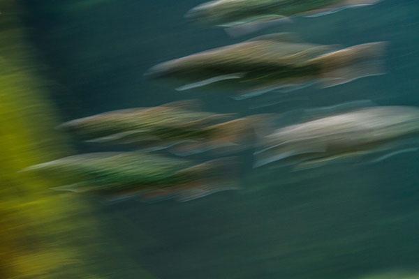 fish game