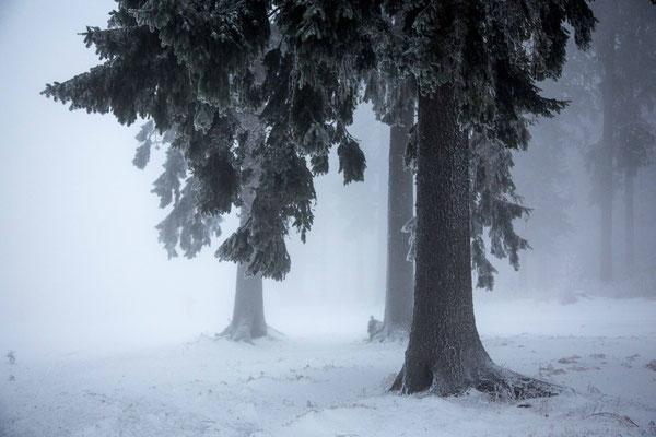 freeze trees