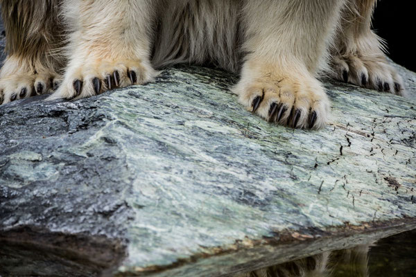 powerful paw's