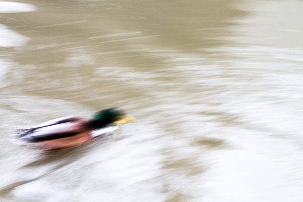 duck escape