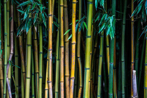 just bamboo cane