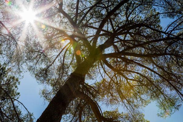 branch rhapsody