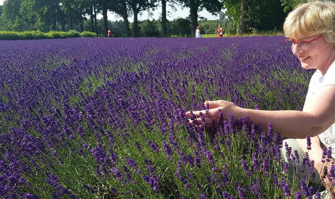 Bild: Lavendel Kokoro