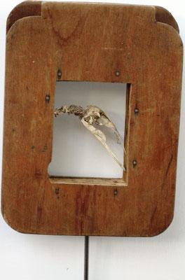 """""""Vogel"""" - Objekt/Holz/Vogelschädel - 28 x 39 - 2011"""