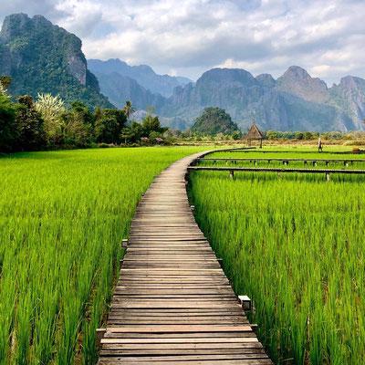 Reisfelder in Vang Vieng / Laos