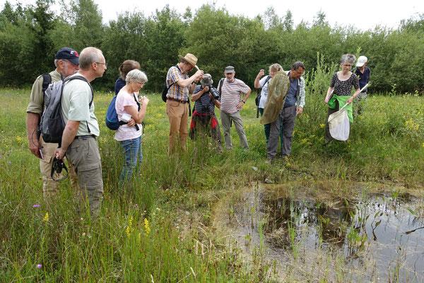 Auf der Suche nach Libellen und Amphibien