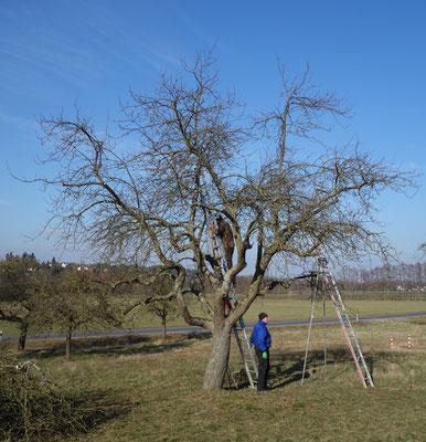 Die Pflege des Baums ist abgeschlossen.