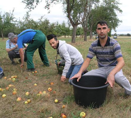 Fahim (li.) und Hussein aus dem Irak kannten bislang weder Streuobstwiesen noch die verschiedenen Möglichkeiten der Weiterverarbeitung des Obstes