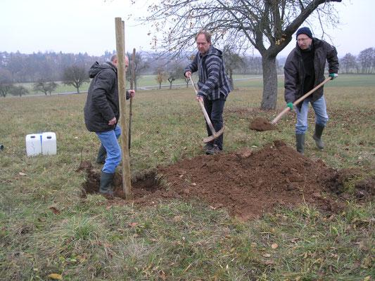Zuerst zwei Pfähle einrammen, dann Loch mit Erde befüllen. Das machen gerade v.l.n.r. Matthias Möbs, Markus Kraiker und Robert Scheibel