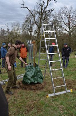 Christian Nadler zeigt das Anlegen eines Bewässerungssacks (zweiteilig) an den Baumstamm.