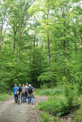 Auf der Suche nach der Heckenbraunelle. Entlang der Usa sind die Teilnehmer ihr nicht begegnet - vielleicht aber hier im Mischwald.