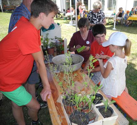 Die junge Besucherin formt eine Samenkugel, Marvin Kössler und Thorben Steuerwald von der NAJU assistieren.