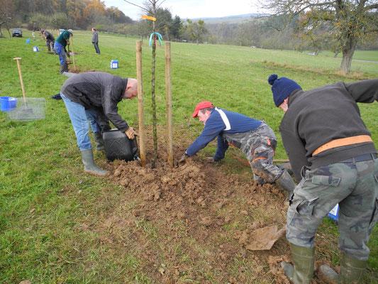 Einschlämmen der Baumwurzeln ist ganz wichtig - auch während des Verfüllens des Pflanzlochs