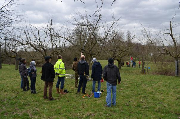 In drei Gruppen wurde der Obstbaumschnitt geübt.