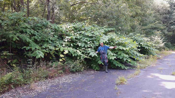 Schiefertälchen im Ober-Mörler Wald: Hier kann der NABU Ober-Mörlen mit Spaten und Astschere nichts mehr ausrichten!