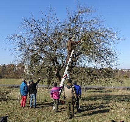 Die Pflege des Baums beginnt.