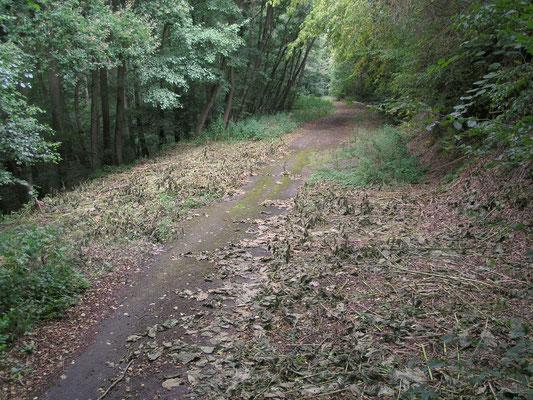 Zwei Wochen später: Der Weg ist dank Forstamt der BIMA wieder frei!