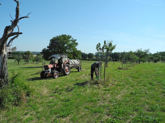 Hier kommt das Wasser im Fass. Die meisten Obstbaumbesitzer nutzen Kanister mit fünf oder zehn Liter Fassungsvermögen.