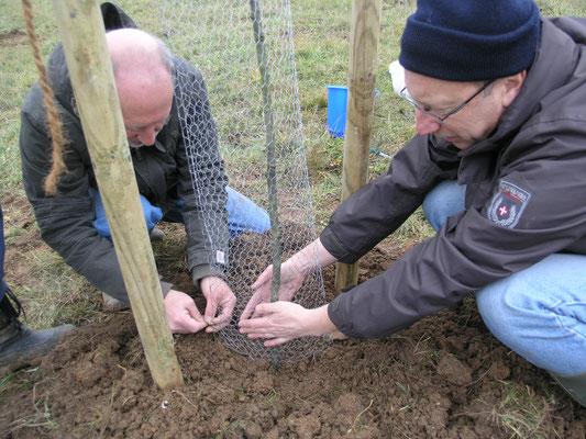 Am Boden muss die Drahthose besonders sorgfältig geschlossen werden, weil insbesondere Nager sich dort Zugang verschaffen wollen.
