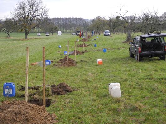 Das Pflanzen von 12 Bäumen ist durchaus eine logistische Herausforderung: Setzlinge, Pfähle und Wasser wollen transportiert sein!