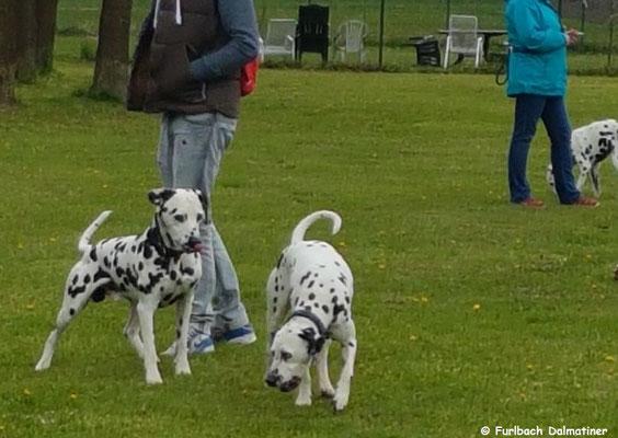 Harrsion Ford vom Furlbach und Fanny vom Furlbach...29.04.2017