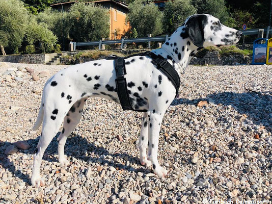 La Boonm vom Furlbach im Urlaub am Gardasee...10.10.2019