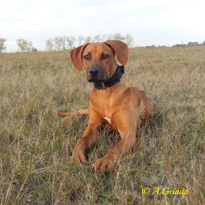 Nala in der Steppe :-)
