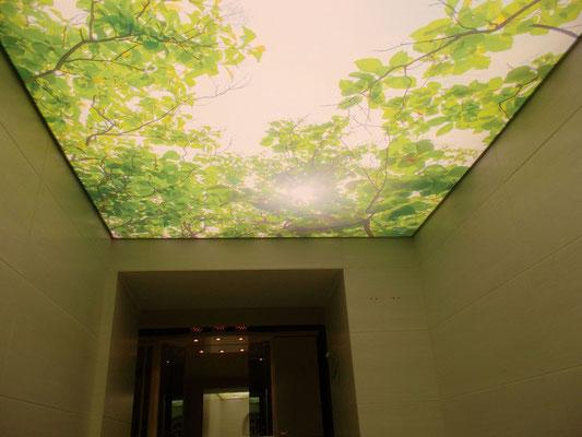 Натяжные потолки с рисунком | купить натяжные потолки с рисунком
