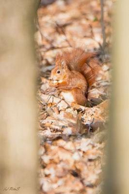 und am Ende freut sich das Eichhörnchen über leckere Funde.