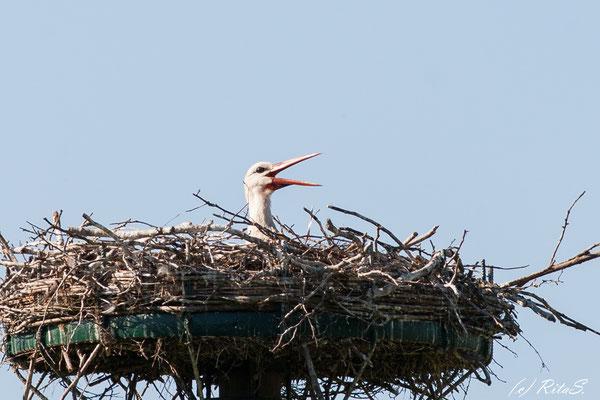 Ganz schön warm oben im Nest