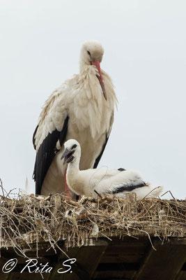 Kleiner Storch ganz groß..