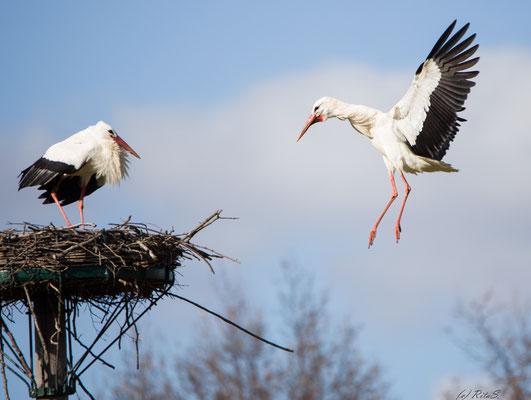 Die Angebote versucht sich dem Nest zu nähern