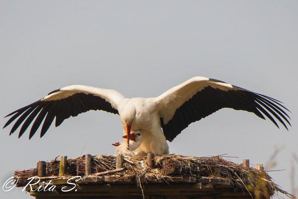 ...auch wenn Sie im Nest lag, ist MAX auf sie aufgestiegen.