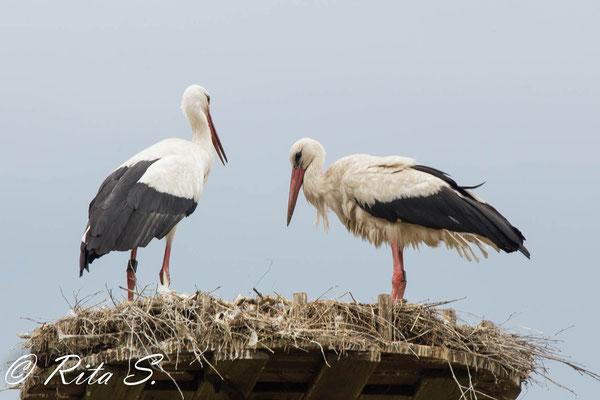 Kurze gemeinsame Momente zusammen im Nest,