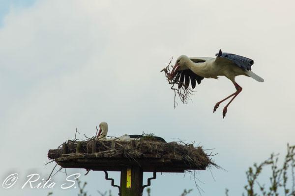 ...ich habe da nochmal was für's Nest besorgt...
