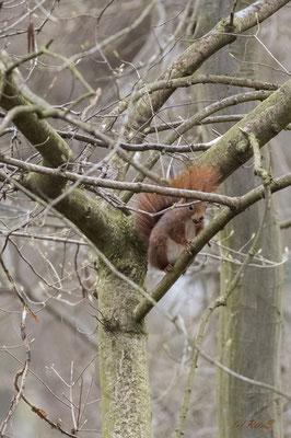 Irgendwo findet jedes Eichhörnchen etwas Futter...